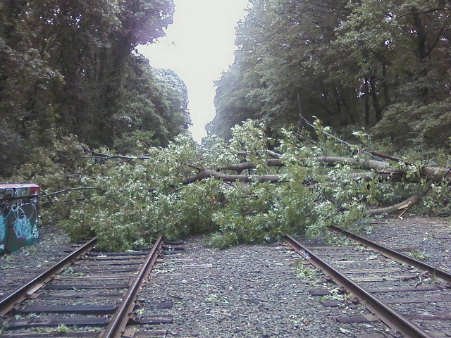Tree Down On LIRR Montauk Branch